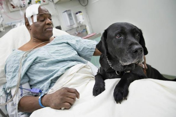 Help Cecil Williams & Orlando the Lab
